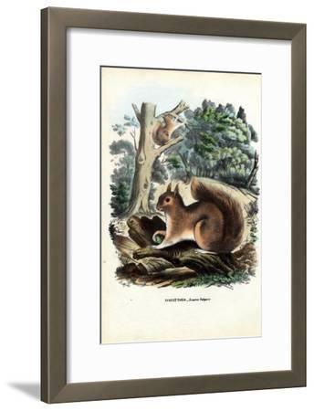 Squirrel, 1863-79