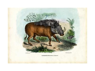 Warthog, 1863-79