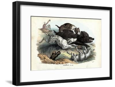 Wild Boar, 1863-79
