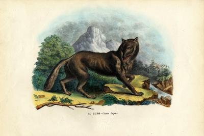 Wolf, 1863-79