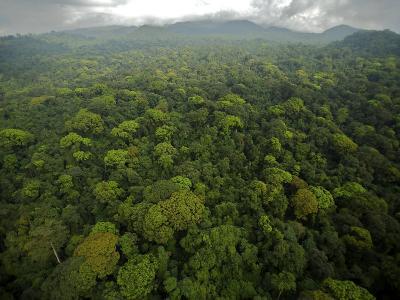 Rain Forest Canopy in the South Coast Region of Bioko Island-Tim Laman-Photographic Print