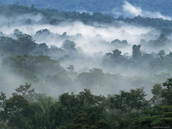 Rain Forest, from Lubaantun to Maya Mountains, Belize, Central America-Upperhall-Photographic Print