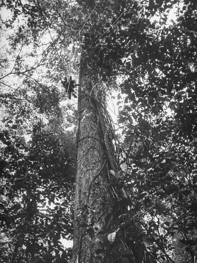 Rain Forest, Suriname, Duth Guiana--Photographic Print
