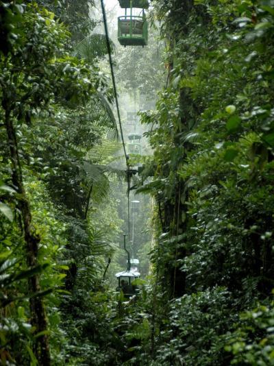 Rain Forest Tram, Braulio Carrillo National Park, Sarapiqui, Costa Rica-Cindy Miller Hopkins-Photographic Print