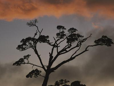 Rain Forest Tree Silhouetted against the Sky, Costa Rica-Michael Melford-Photographic Print
