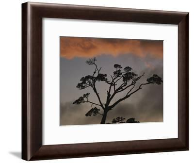 Rain Forest Tree Silhouetted against the Sky, Costa Rica-Michael Melford-Framed Photographic Print
