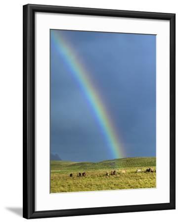 Rainbow Above Icelandic Horses-Babak Tafreshi-Framed Photographic Print