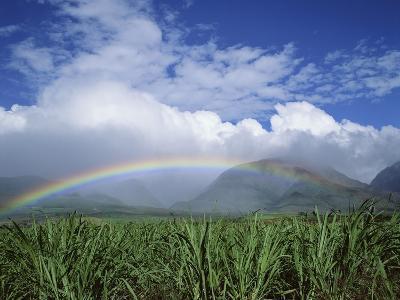 Rainbow Above Sugar Cane Field on Maui-James Randklev-Photographic Print