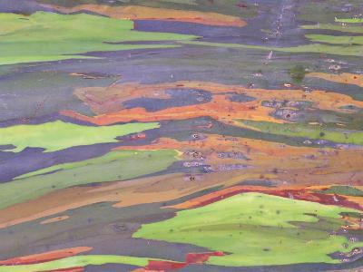 Rainbow Eucalyptus, Bark Pattern, Botanical Garden-Stan Osolinski-Photographic Print