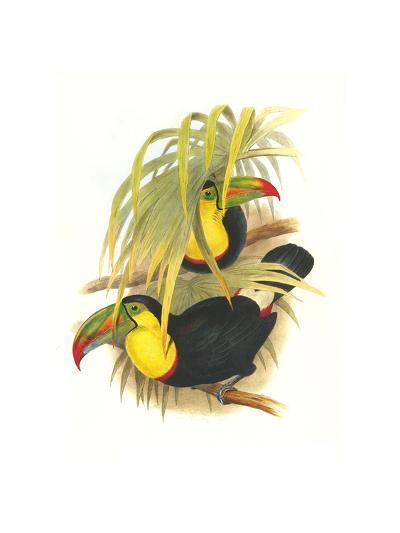 Rainbow or Keel Billed Toucan-John Gould-Art Print