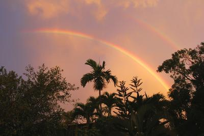 Rainbow Palms-Robert Goldwitz-Photographic Print