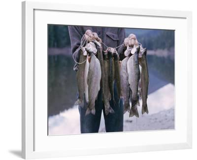 Rainbow Trout--Framed Photographic Print