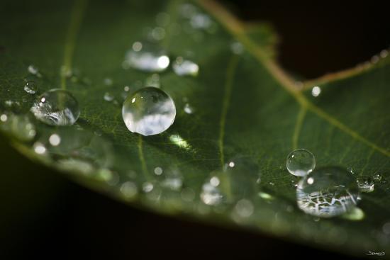 Raindrop on Leaf-Gordon Semmens-Photographic Print