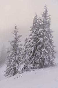 Deeply Snow-Covered Trees, Salzburg, Austria by Rainer Mirau