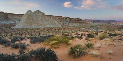 Desert, Near Stud Horse Point, Arizona, Usa