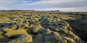 Moss Cushion on a Lava Field, Near Kirkjubaerklaustur, Eldhraun, South Iceland, Iceland by Rainer Mirau