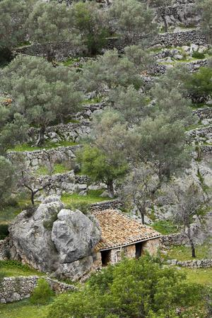 Spain, Majorca, Serra De Tramuntana, Caimari, Olive Grove, Stone House
