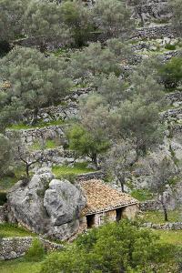 Spain, Majorca, Serra De Tramuntana, Caimari, Olive Grove, Stone House by Rainer Mirau