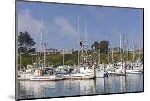 Spud Point Marina, Bodega Bay, California, Usa by Rainer Mirau