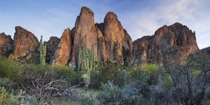 The Bulldogs, Carnegiea Gigantea, Goldfield Mountains, Lower Salt River, Arizona, Usa by Rainer Mirau