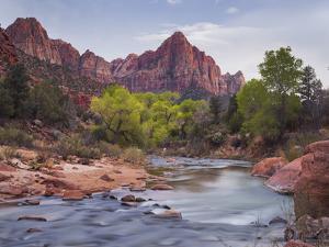 The Watchman, Cottonwood, Virgin River, Zion National Park, Utah, Usa by Rainer Mirau
