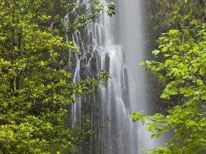 Trees and Waterfall with Caldeirao Verde, Queimados, Madeira, Portugal by Rainer Mirau