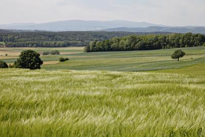 Landscape, Southern Burgenland, Austria