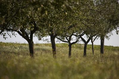 Leafy Trees in an Unmown Field