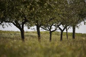 Leafy Trees in an Unmown Field by Rainer Schoditsch
