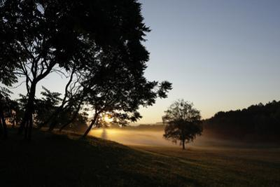 Sunrise across the Trees and Fields with House Dellacher, Oberwart, Burgenland, Austria