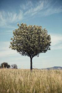 Tree in an Unmown Field with a Hill in the Background in Southern Burgenland, Austria by Rainer Schoditsch