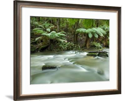 Rainforest, Beauchamp Falls, Great Ocean Road, Otway N.P., Victoria, Australia-Thorsten Milse-Framed Photographic Print