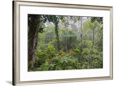 Rainforest Canopy Walkway, Sabah, Borneo, September 2015-Adrian Davies-Framed Photographic Print
