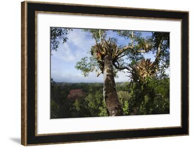 Rainforest Canopy. Yasuni NP, Amazon Rainforest, Ecuador-Pete Oxford-Framed Photographic Print