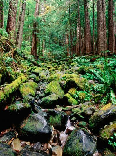Rainforest in Sol Duc Rain Forest, Olympic National Park, Washington-John Elk III-Photographic Print