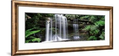 Rainforest, Mt. Field National Park, Tasmania, Australia--Framed Photographic Print