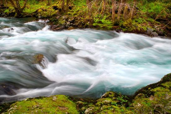 Rainforest River II-Douglas Taylor-Photo