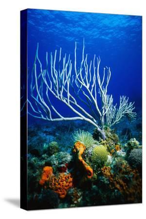 Corals, Sponges, Sea Anemones, and Sea Fans