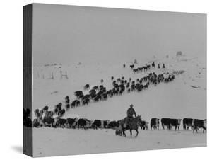 Cattle Drive on Snowy Landscape to Virginia City by Ralph Crane