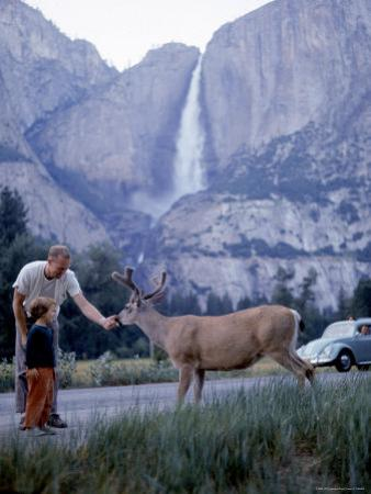 Father and Son Feeding a Wild Deer in Yosemite National Park with Yosemite Falls in the Background by Ralph Crane