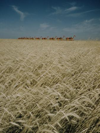 Harvest Story: Combines Harvest Wheat at Ranch in Texas