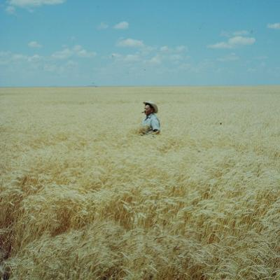Harvest Story: Farmer Stands Chest Deep in Wheat, Texas