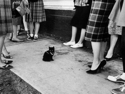 """Little Black Kittens Waiting for Audition for Movie """"Tales of Terror"""" in Hollywood"""
