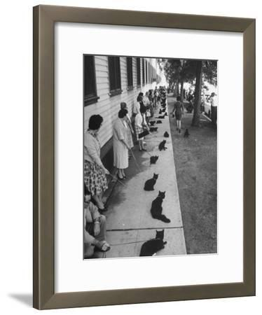 "Owners with Their Black Cats, Waiting in Line For Audition in Movie ""Tales of Terror"""