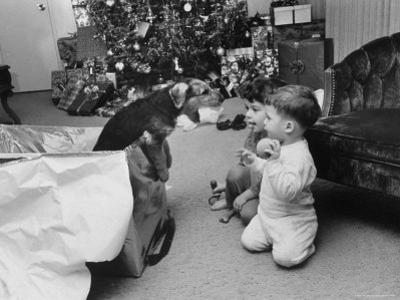 Raymond and Susie McFarland Looking at Their New Airedale Puppy Leaning Out of a Christmas Gift Box