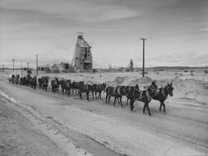 Trademark Twenty Mule Team of the US Borax Co. Pulling Wagon Loaded with Borax by Ralph Crane