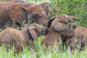 Africa. Tanzania. African elephants at Tarangire National Park, by Ralph H^ Bendjebar
