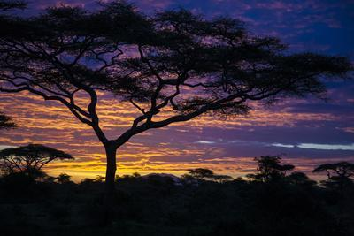 Africa. Tanzania. Morning sunrise at Ndutu, Serengeti National Park.