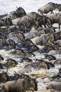 Africa. Tanzania. Wildebeest herd crossing the Mara River, Serengeti National Park. by Ralph H. Bendjebar