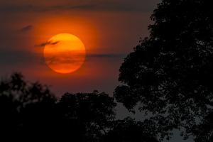 Brazil. A colorful orange sunset in the Pantanal. by Ralph H^ Bendjebar